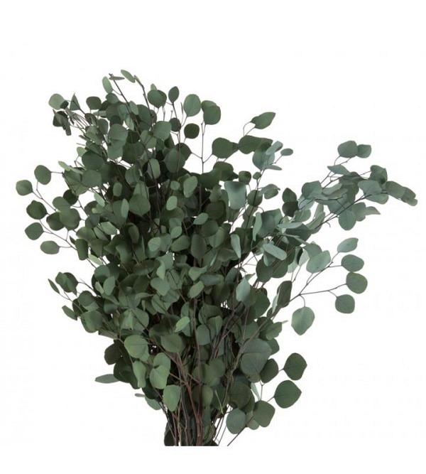 Eukalyptus Populus grün stab. 160g (1)